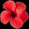 flower alone